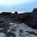 Seegrasberge von der Natur aufgetürmt I