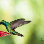 auf Adventure Farm in Plymouth auf der man viele angelockte Kolibris und andere Vögel beobachten kann