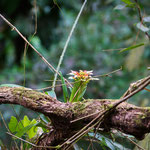 Tobago Forrest Reserve