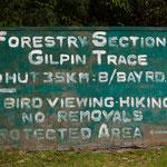 Tobago Forrest Reserve - Gilpin Trail