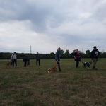 2018 in Unterfrintrop Hundebegegnungen
