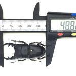 パラレルスネブト 48.8mm