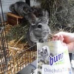 Die Chinchillas sagen Danke für das Futter