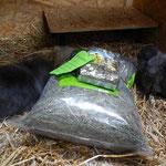 Die Kaninchen sagen Danke für das Heu und die Kräuter