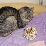 Sternchen sagt Danke für Sheba Katzenfutter