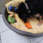 Chicco sagt Danke für das Spielzeug und die Leckerlies