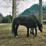Oriège et sa maman Guindoullo, juin 2002 !
