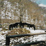 La zone d'attache des poneys, un grand paddock en mars 2002