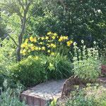 Die Frühlingstaglilie- wunderschön duftend muss aber im Zaun gehalten werden