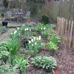 Weisse Tulpen bringen Licht in den Schatten