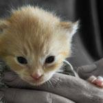 eine von vielen kleinen Kätzchen und Katerchen die bald zur Vermittlung bereit stehen