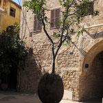 Jaffa- l'Olivier suspendu de Ran Morin