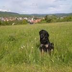 Blick über Bischofsheim