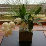 お正月の花:大王松にシンビジューム
