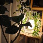 植物と一緒に深呼吸