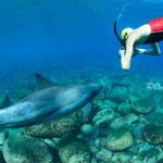 御蔵島ドルフィンスイム/イルカを撮影するドルフィンスイマー