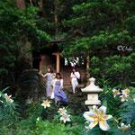 御蔵島ドルフィンスイム/サクユリの咲く神社