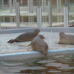 Auffangstation für Seehunde