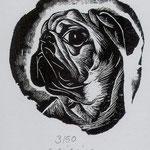Schilling, Stefanie . Leipzig. Holzstich. 2009. Auflage 50. Blatt 115 x 85 mm. Platte 60 x 55 mm. Darwin im Profil. 001