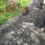 こんな近くにもお猿が