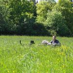 Torsten auf der Suche nach dem ultimativen Hunde-in-der-Wiese-Bild