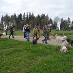 wieder eine große Gruppe Hunde und Menschen unterwegs