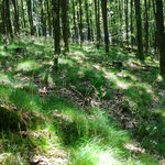 über schattige Waldwege