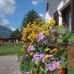 Michèle's Leidenschaft, Ferienwohnung, Bregenzerwald Schoppernau