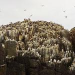 Zeevogelkolonies
