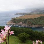 Op de voorgrond de Belladonnalelie (Amaryllis belladonna), afkomstig uit Zuid-Afrika, maar alomtegenwoordig op het eiland (langs wegen, lanen..)