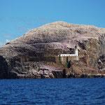 Bass Rock, North Berwick, Schotland