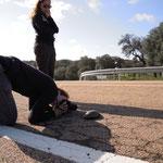 Schildpad fotograferen op de snelweg!