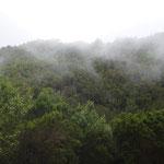 Laurierbossen in noorden Tenerife