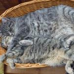Unsere  zwei Katzen Lilly u. Earl Grey