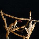 Fütterung in der SamburuSerenaLodge