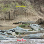 Hippos at Talek River