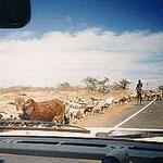 Auf dem Weg in den Samburu