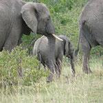 Elefanten im Samburu