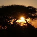 Sundown in Massai Mara