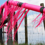 Pink im Wind  (Foto: R. Helmholtz)