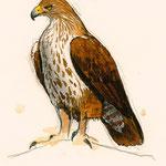 Ilustraciones realizadas para la gráfica del Centro de Interpretación del Parque Natural de las Hoces del Cabriel bajo la dirección de arte de Espirelius. Proyecto de Espirelius y Pepe Beltrán, 2010.