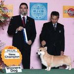 2008 FCI 埼玉 インターナショナルドッグショー WINNERS DOG