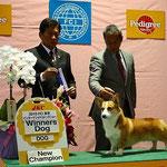 2010 FCI  東京 インターナショナルドッグショー WINNERS DOG