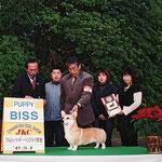2007 ウェルシュ・ コーギー・ペンブローク部会展 PUPPY BISS