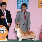 2008 FCI  東京 インターナショナルドッグショー WINNERS DOG