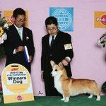 2010 FCI 東北 インターナショナルドッグショー WINNERS DOG