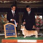 2008 埼玉北 クルーガーフンドクラブ展 BEST OF BREED