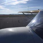 Oie sur la piste de l'aérodrome