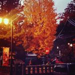お風呂から上がって帰り道。 ほんのり灯った街路灯。お寺の境内。大きなイチョウと子どもの声。晩秋の夕暮れの光景、やさしい景色でした。