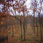小さかったサムライくんをつれてよく歩いた道を走ってみました。カブトムシをつかまえにきたクヌギの林。一度伐採されていましたが、そのあと植えられた新しい苗木が少しずつ大きくなってきたところでした